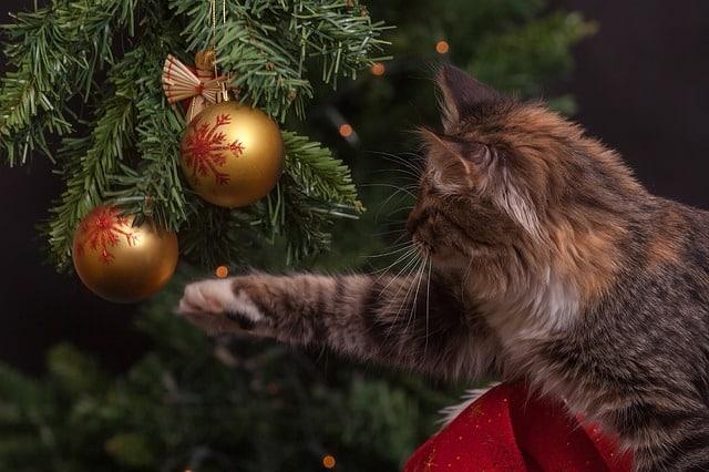 chat abîmant un sapin de Noël
