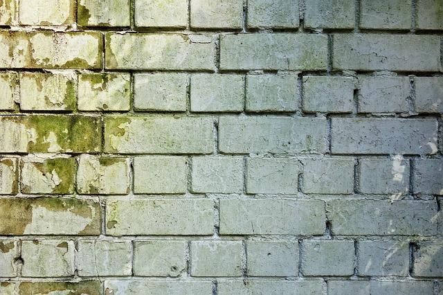 moisissures sur un mur de briques