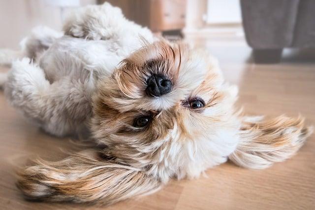 aménagement pour chien dans la maison