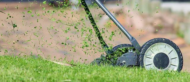 pelouse tondue