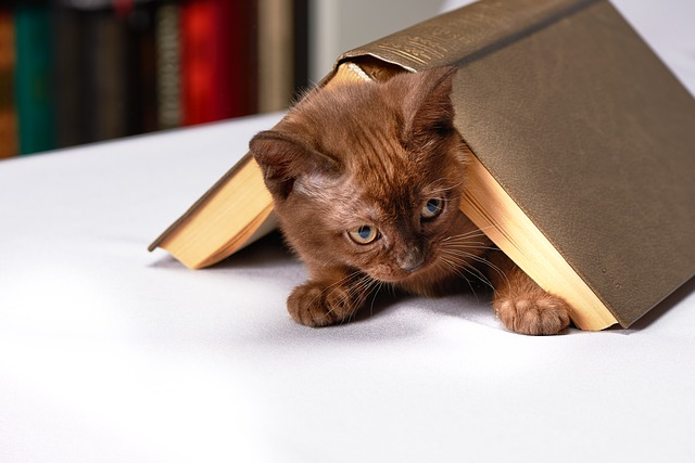 chat sous un livre dans la maison