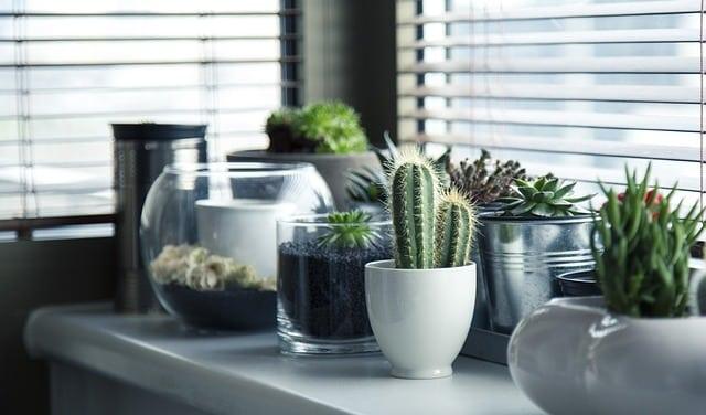 plantes dépolluantes dans un pot