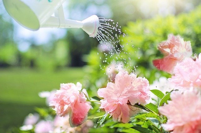 arrossage du jardin